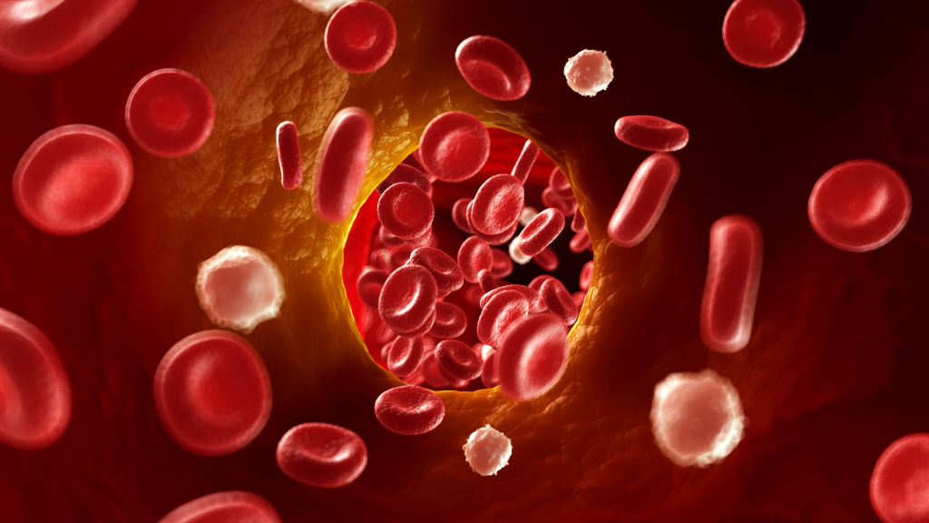 Prudent Biotech - Red Blood Cells Picturization