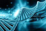 PrudentBiotech.com ~ DNA Strand Biotech Stocks