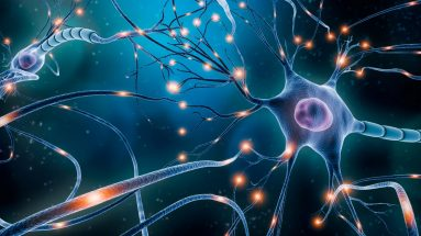 Prudentbiotech.com ~ Brain Neurons
